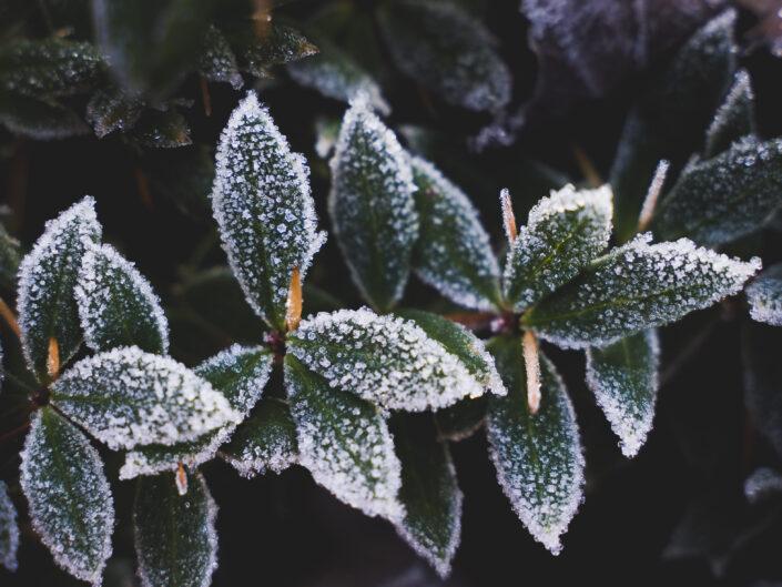 Koude winterdagen