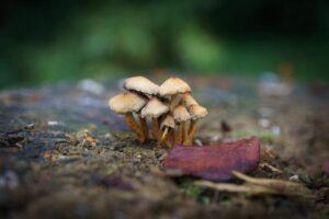 Foto met vignet van paddenstoelen op boomstam Jaap Burggraaf fotografie
